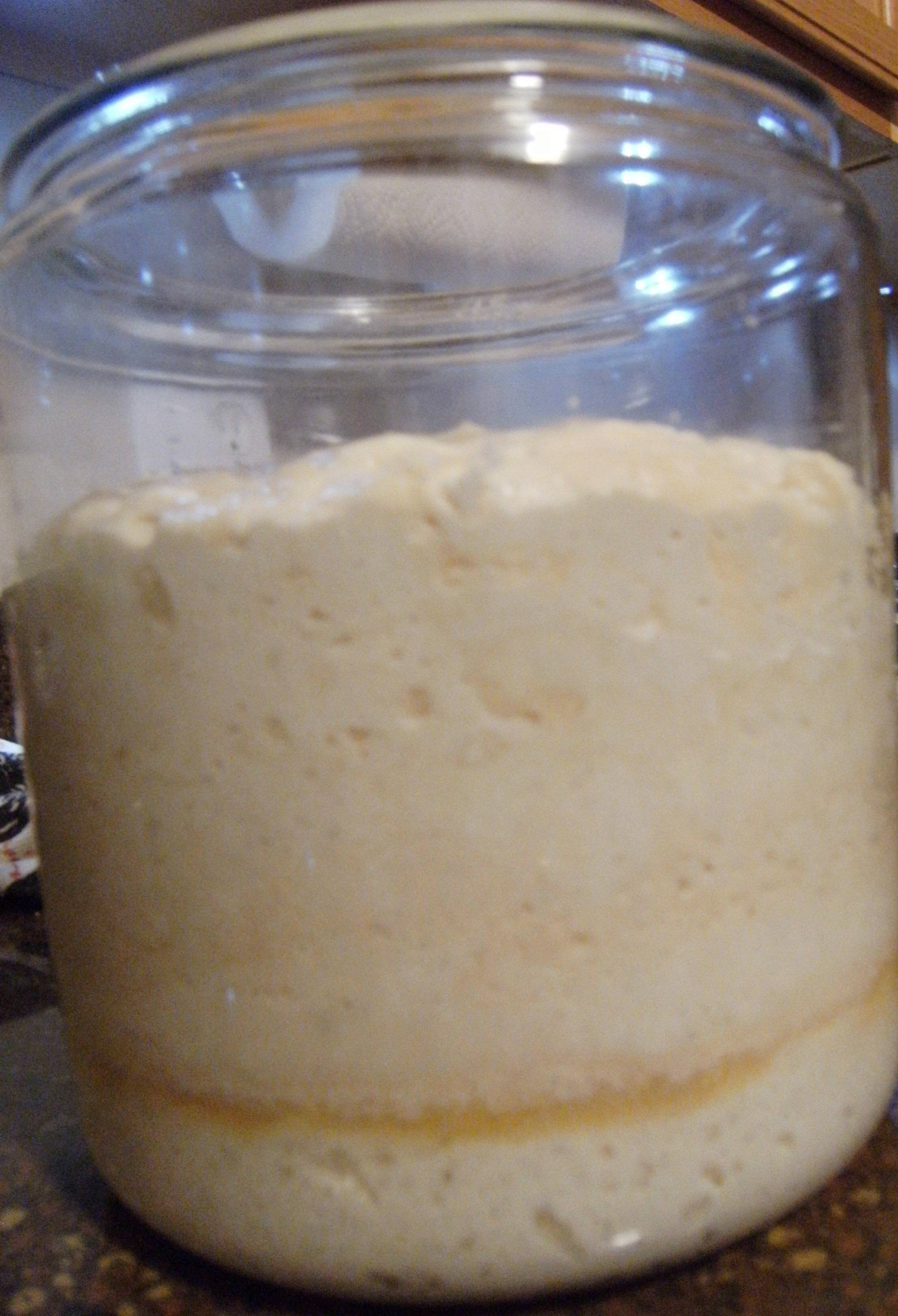 homemade sourdough sponge as it's growing