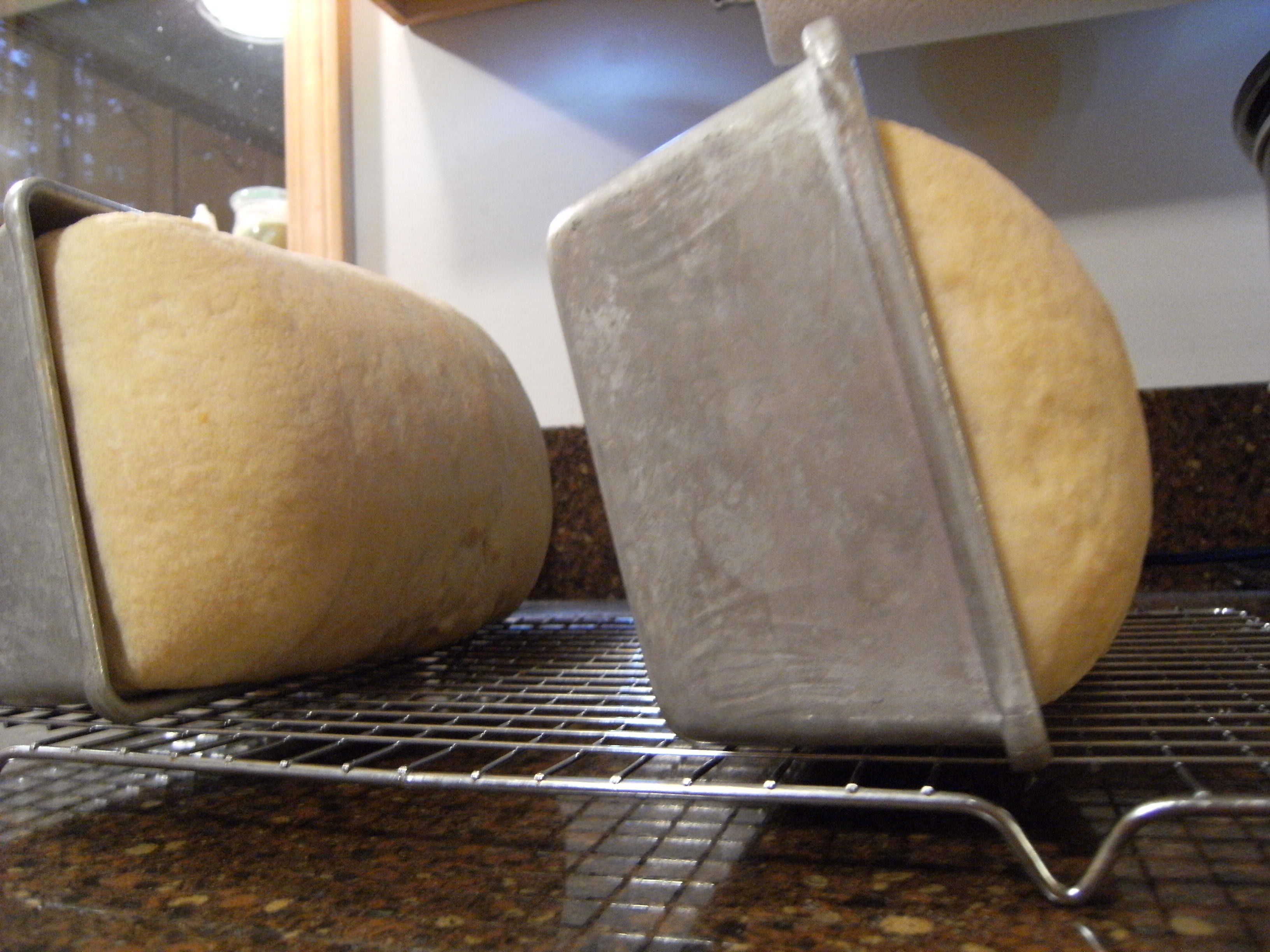 homemade-sourdough-loaves-cooling