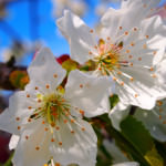Blossom Time!