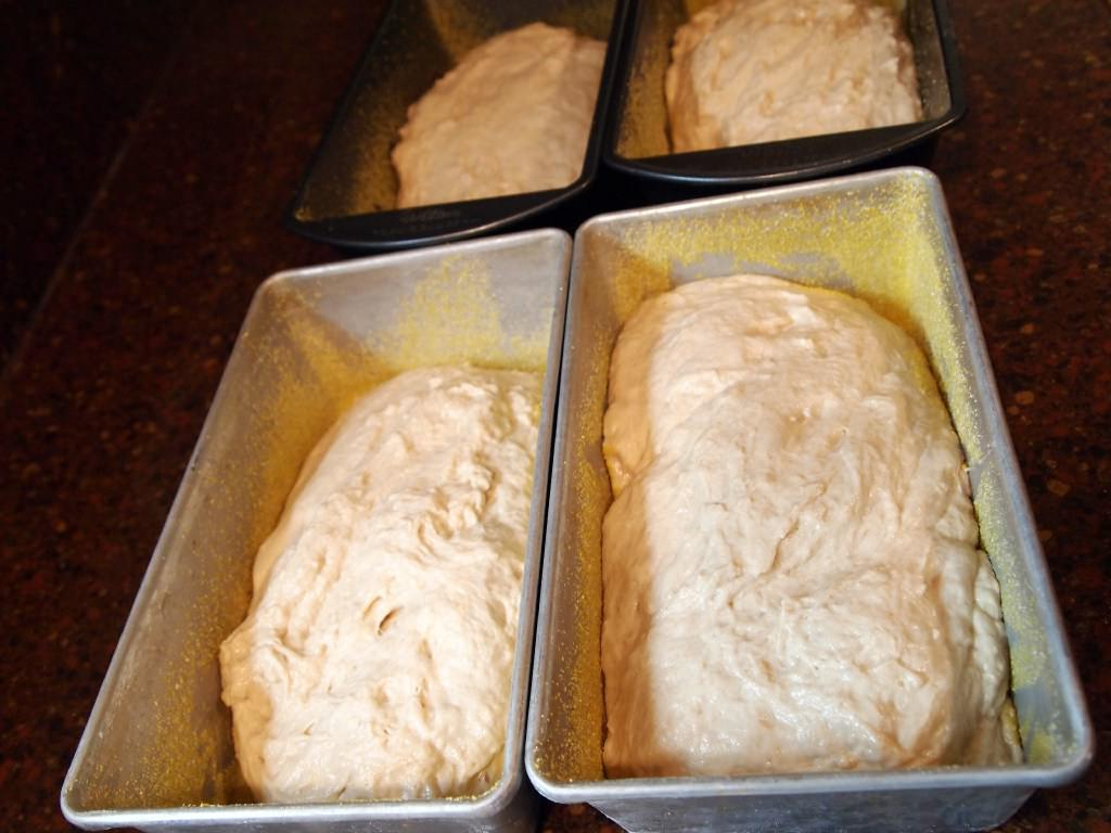Whole Wheat English Muffin Bread - before baking
