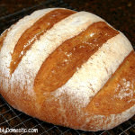No Knead Artisan Cheddar Bread