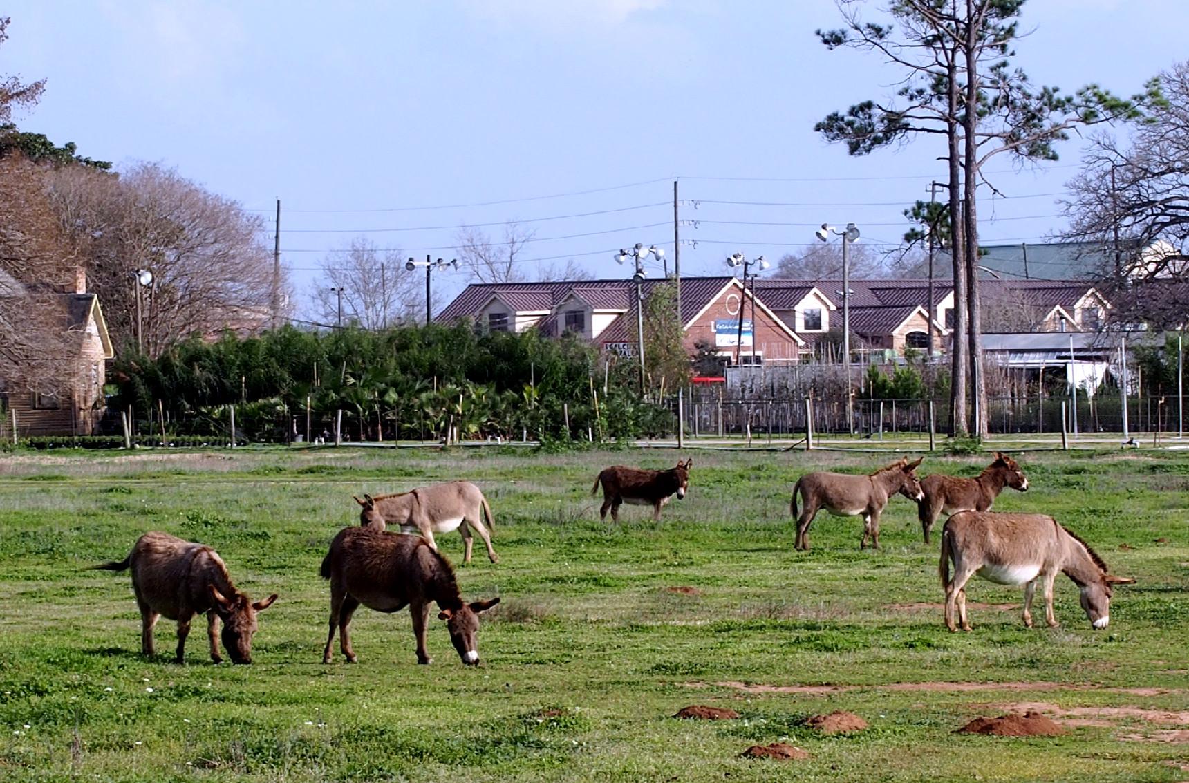 Baby Donkey Farm