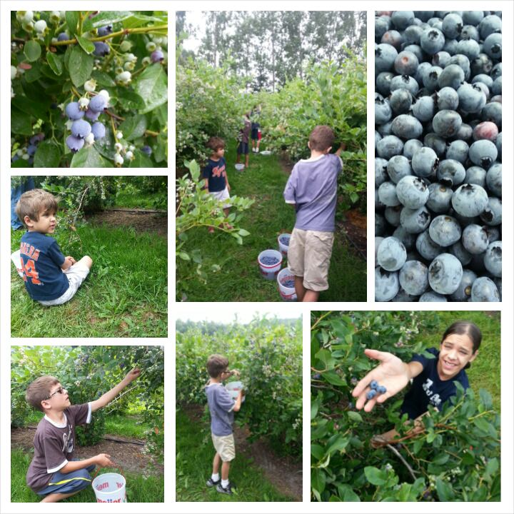 The Sons at work, picking fresh berries.