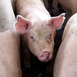 Brenneman-Pork-Pass-the-Pork-Tour-Farmer-Interview