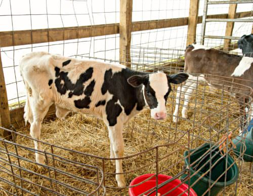 5 Minutes with a Farmer: NuDream Dairy