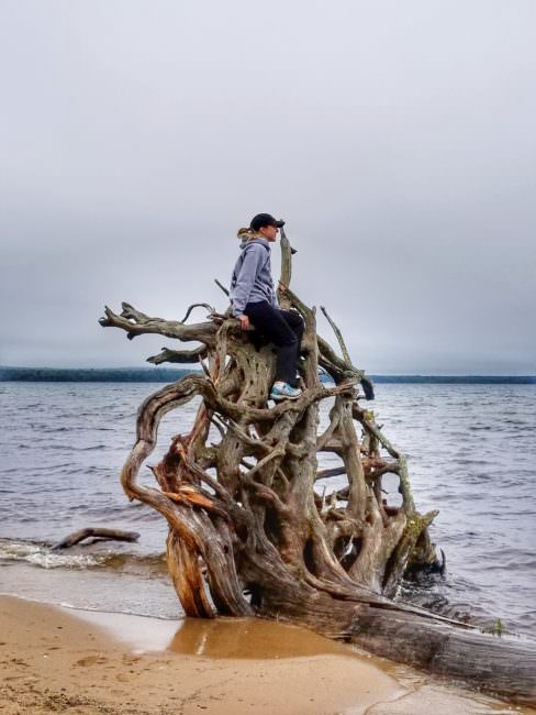 driftwood-tree-lake-superior